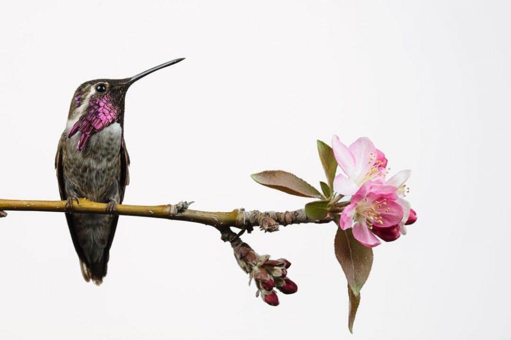 humming bird on branch